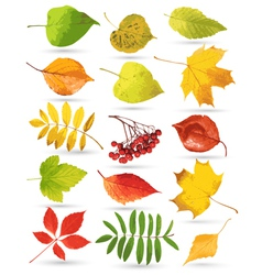 Set of colorful leaves vector