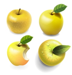 Set of yellow ripe Apples four various view vector image