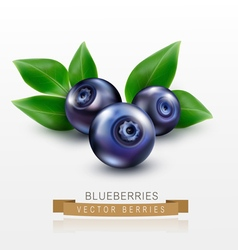 Three blueberries with green leaves isolated vector