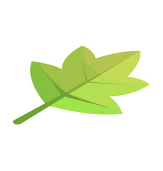 Viburnum green tree leaf icon isometric style vector