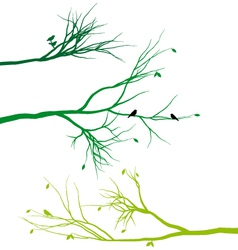tree branches with birds and leaves vector image vector image