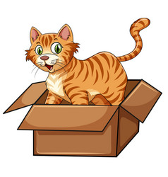 a cat in the box vector image
