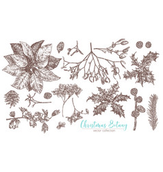 christmas vintage collection flowers and plants vector image
