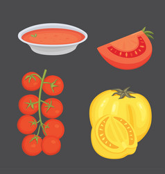 Collection of fresh red tomatoes and soup vector