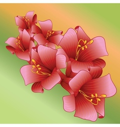 Decorative flower background vector image