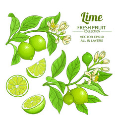 Lime branches set vector