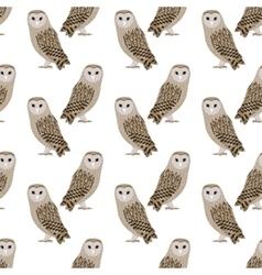 pattern barn owl vector image