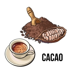 Pile of cocoa powder cacao fruit and hot vector image