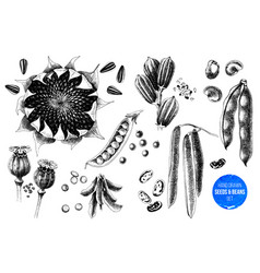 Set hand drawn seeds and beans vector