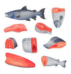 Set sliced pieces salmon vector