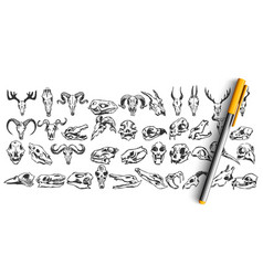 skulls doodle set vector image