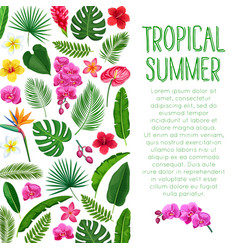 tropical layout vector image