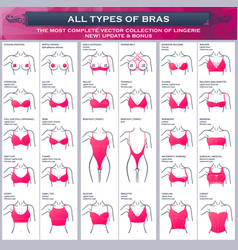 types bras the most complete collection vector image