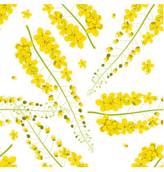 cassia fistula - golden shower flower on white vector image