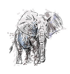 Colored Hand drawing of an elephant vector
