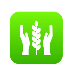 hands and ear of wheat icon digital green vector image