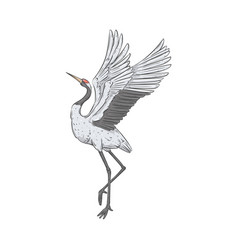 red-crowned crane stands on one leg with wings vector image