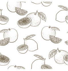 seamless pattern with drawing citrus fruit vector image