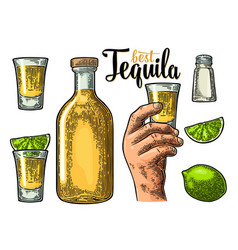 Set tequila hand hold glass bottle salt lime vector