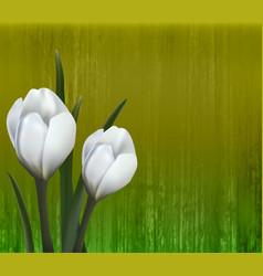 floral background spring flowers crocus vector image