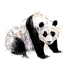Colored Hand drawing panda vector image