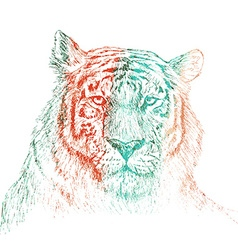Face of tiger hand drawn Sketch on white vector