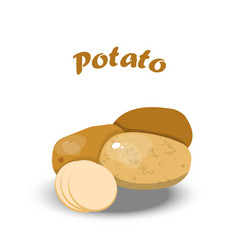 fresh potato vector image