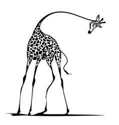 Graceful giraffe vector