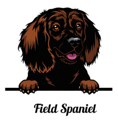 Head field spaniel - dog breed color image a vector