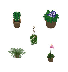 Isometric plant set of peyote plant blossom and vector