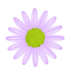 Violet Daisy Flower on A White Background vector