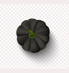 black pumpkin isolated on a transparent background vector image