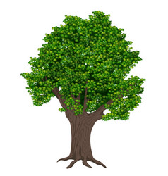 realistic high detailed plant tree isolated vector image