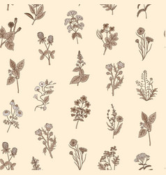 hand drawn medical herbs pattern or vector image