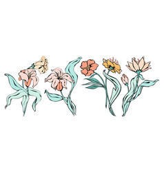 line art lilies flowers silhouette set vector image