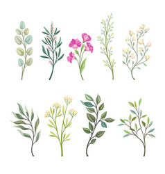 Set branches field plants vector