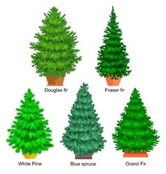 Set of potted christmas tree like fir or vector image