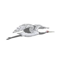 white japanese crane flying in air vector image