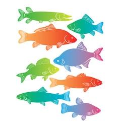 river fish vector image