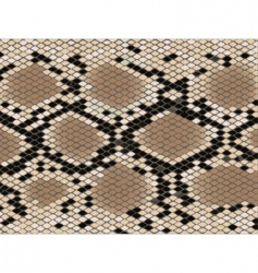 snake skin pattern vector image vector image