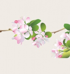 crabapple blossoms vector image