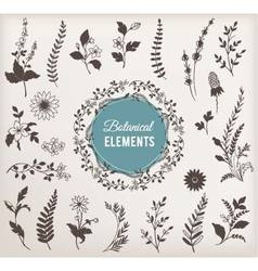 Set of Botanical Elements vector