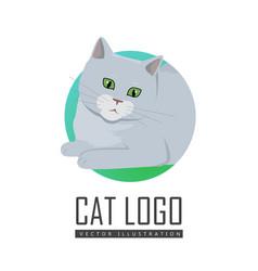 cute grey cat vector image