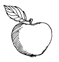 apple sketch vector image