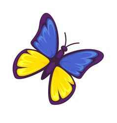 butterfly in yellow and blue colors isolated on vector image