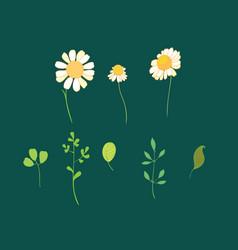 set daisy flowers and leaves vector image