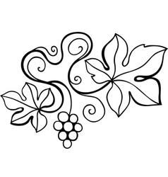 Vine design element vector image