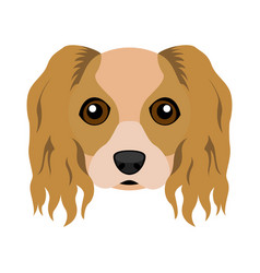Cute cavalier king charles spaniel dog avatar vector