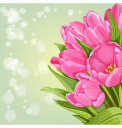 Background of pink tulips vector image