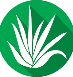 Aloe vera plant icon vector